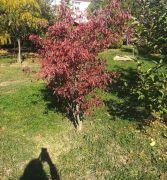 2018 10 11 03 mini arboretum legyesbenye